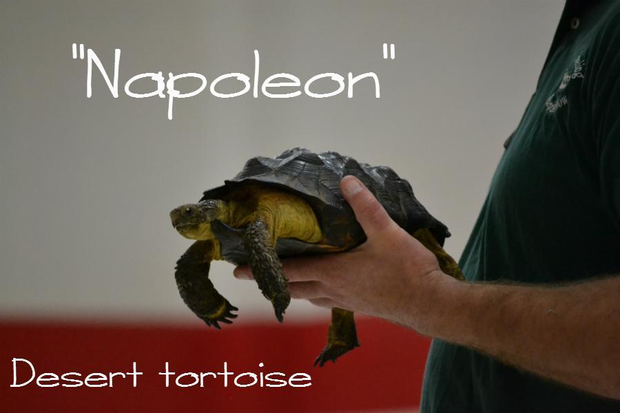 POCOHO_03.17.15_Reptile03