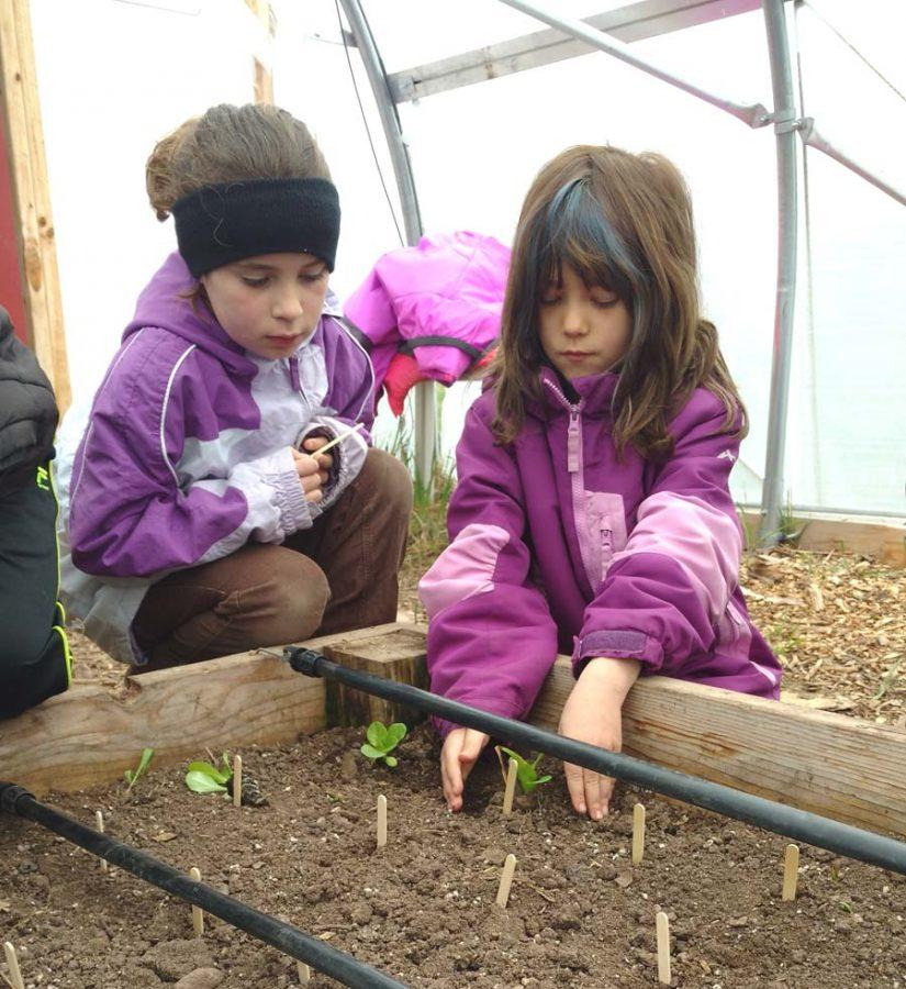 Gabby LHeureux & Brooklyn Lehto plant seeds in the High Tunnel