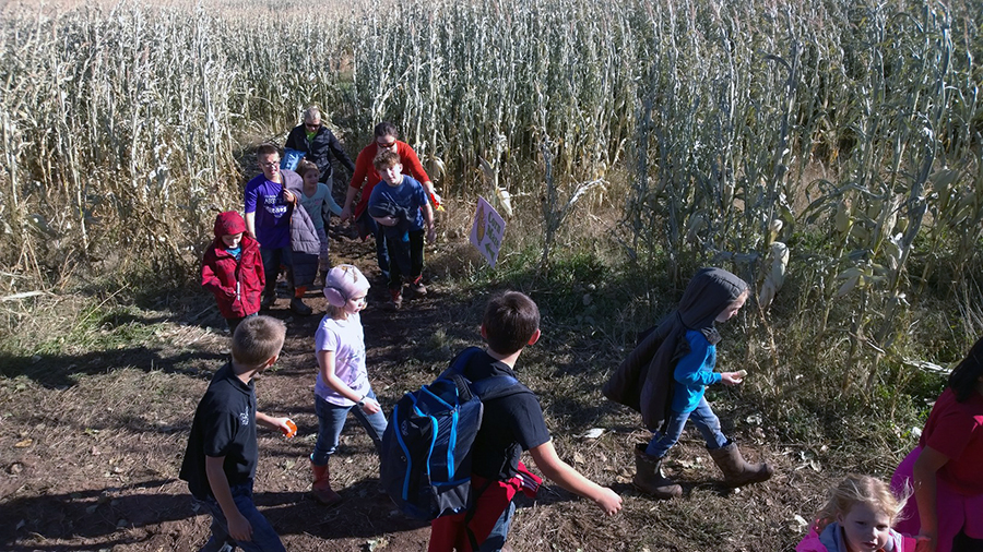 Third and Fourth Graders explore the corn maze.